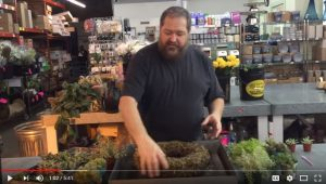 HOW TO: use Sphagnum Moss Living Wreaths