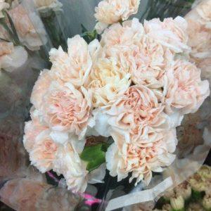 Carnation Peach $0.55